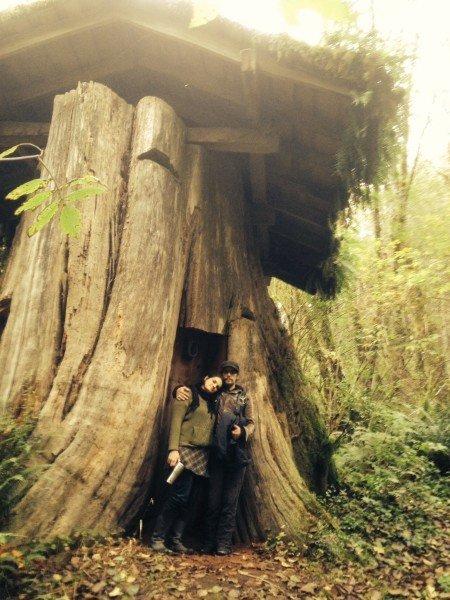 дом в пне дерева