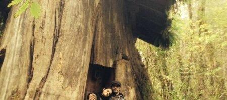 Дом в пне дерева. Такое тоже было